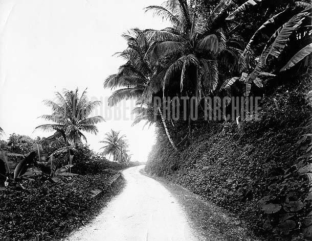 Bog Walk Road, St Catherine, Jamaica, 1890. Photo by A. Duperly & Son
